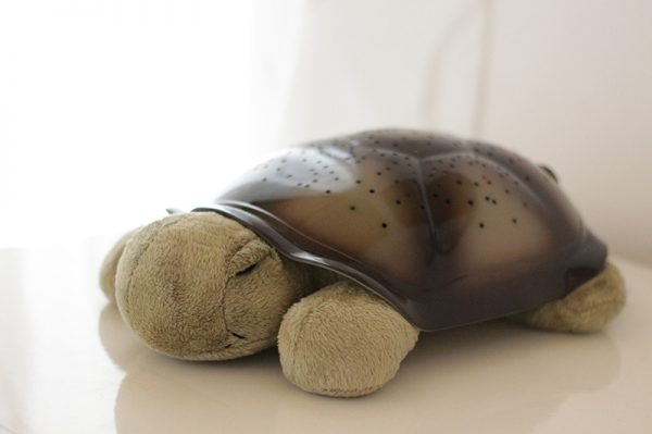 twilight turtle-4