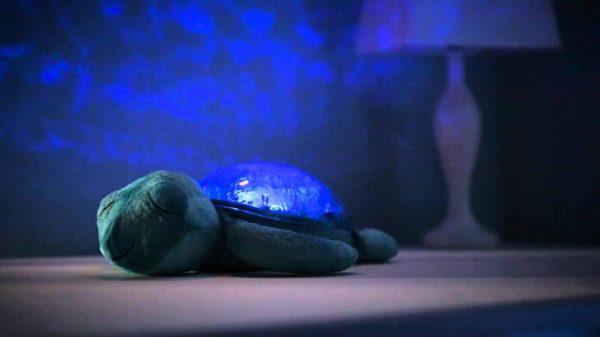 tranquil turtle acqua-2